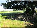 SJ5760 : Path across Rookery Farm by Jeff Buck
