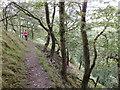 SN7377 : Footpath into the Rheidol gorge by Rudi Winter