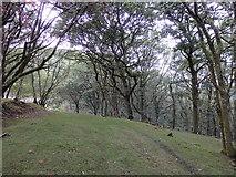 SN7277 : Above Rhiwfron halt by Rudi Winter