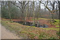TQ4298 : Small pond, Epping Forest by N Chadwick