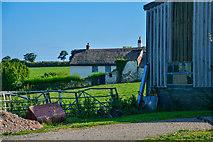 SX7796 : Mid Devon : Grassy Field by Lewis Clarke