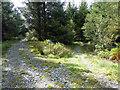 SH7907 : Track junction on Fridd Cae'rfelin by John Lucas