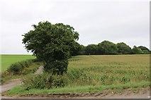 SU6825 : Field by the A272 near Bordean by David Howard