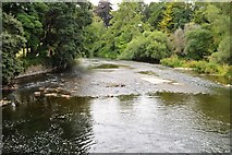 S0424 : River Suir by N Chadwick