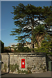 ST5673 : Postbox and cedar, Clifton by Derek Harper