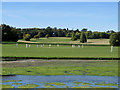 TL5238 : Audley End: Sunday cricket by John Sutton