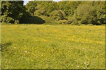 TQ5942 : Buttercup meadow by N Chadwick