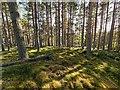 NH8845 : Hut Circle by valenta