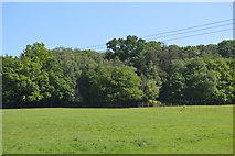 TQ5942 : Appletree Wood by N Chadwick