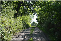 TQ5942 : Footpath through Appletree Wood by N Chadwick