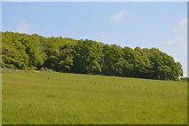 TQ6043 : Castlehill Wood by N Chadwick