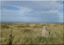 NZ7714 : Trig point on Newton Mulgrave Moor by John Slater