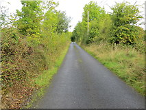 M9561 : Tree-lined lane near Clooncah by Peter Wood