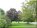 NT9352 : Trees outside Paxton House by Stephen Craven