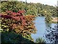 SU9941 : Autumn colour at Winkworth Arboretum by Graham Hogg