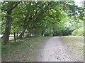 TQ6532 : Path around Bewl Water by Marathon