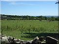 NZ0625 : Grazing near Cust Barn by JThomas