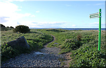 NS3119 : Path to Greenan Shore by Billy McCrorie