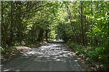 TQ6142 : Pembury Walks by N Chadwick