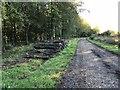 TQ0708 : Log Pile by Chris Thomas-Atkin