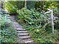 SU9940 : Stepped path to Sorbus Hill by Graham Hogg