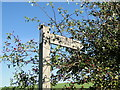 TG2036 : Restricted byway sign and hawthorn berries by Adrian S Pye