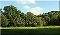 SX8481 : Field by the Beadon Brook by Derek Harper