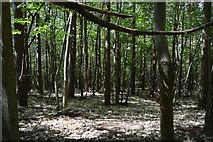 TQ6242 : Gimble Grove by N Chadwick