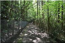 TQ6241 : Footpath, Forest Wood by N Chadwick