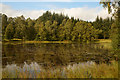 NO0661 : Small Loch in Kindrogan Wood, Perthshire by Andrew Tryon