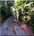 SX9983 : West along Clay Lane, Lympstone, Devon by Jaggery