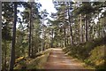 NO4794 : The road up Glen Tanar by Richard Webb