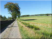 NY9449 : Grazing land on north side of estate road by Trevor Littlewood