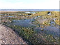 TM0308 : The salt marsh at Tip Head seen from the beach by Marathon