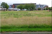 NS5565 : Ibrox stadium by Thomas Nugent