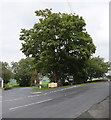 SD8156 : Tree at the junction… by Bill Harrison