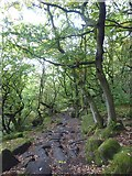 SK2579 : Path in Padley Gorge by Graham Hogg