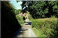 TL4600 : Access Lane from Little Thorn Hall Farm by Chris Heaton