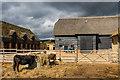 TL3451 : Wimpole Home Farm by Ian Capper