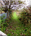 ST0090 : Grassy track north from Lewis Arms Row, Penrhiwfer by Jaggery