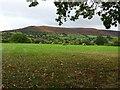 SO1428 : View of Mynydd Llangorse by Philip Halling