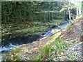 SX5083 : Lydford Gorge [17] by Michael Dibb