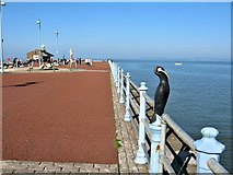 SD4264 : Stone Jetty, Morecambe by G Laird