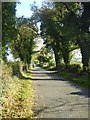 N5272 : Tree lined country road at Bellany by Oliver Dixon