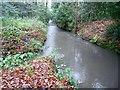 SU8155 : River Hart (Eastern Arm): Downstream of Fleet Pond by Nigel Cox