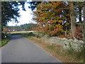 NO6998 : SW corner of Hawthorn Wood by Stanley Howe