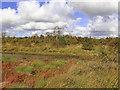 SN6862 : The Bog of Tregaron in Ceredigion by Roger  Kidd
