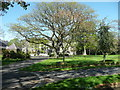 Q8314 : Tree in the Town Park, Tralee by Humphrey Bolton