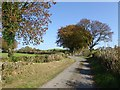 N5772 : Country lane near Galmoystown by Oliver Dixon