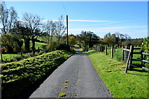 H5574 : Merchantstown Road, Merchantstown Glebe by Kenneth  Allen